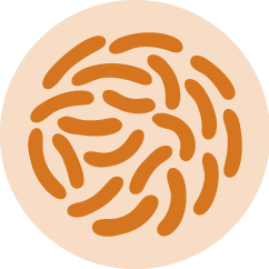 CALIBRA - VD - podklady pro www - Gastro - 6-21 - 4